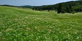 Češi chtějí chránit a také rozšiřovat divokou přírodu