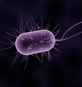 Bacterial Genetics and Genomics