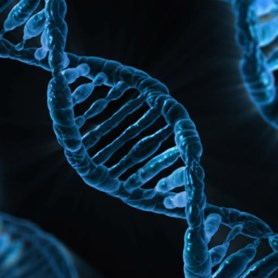 Recombination and DNA Repair