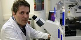 Muni.cz article on stem cells