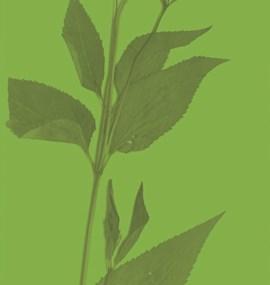 Publikace Krajinou environmentálních studií II