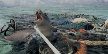 Doba plastová: Plasty konzumujeme v pitné vodě, soli i medu
