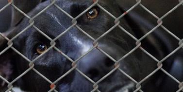 Mazlíček, či hračka? Novela trestního zákoníku má přinést vyšší tresty za týrání zvířat