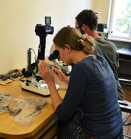 The archaeometric laboratory