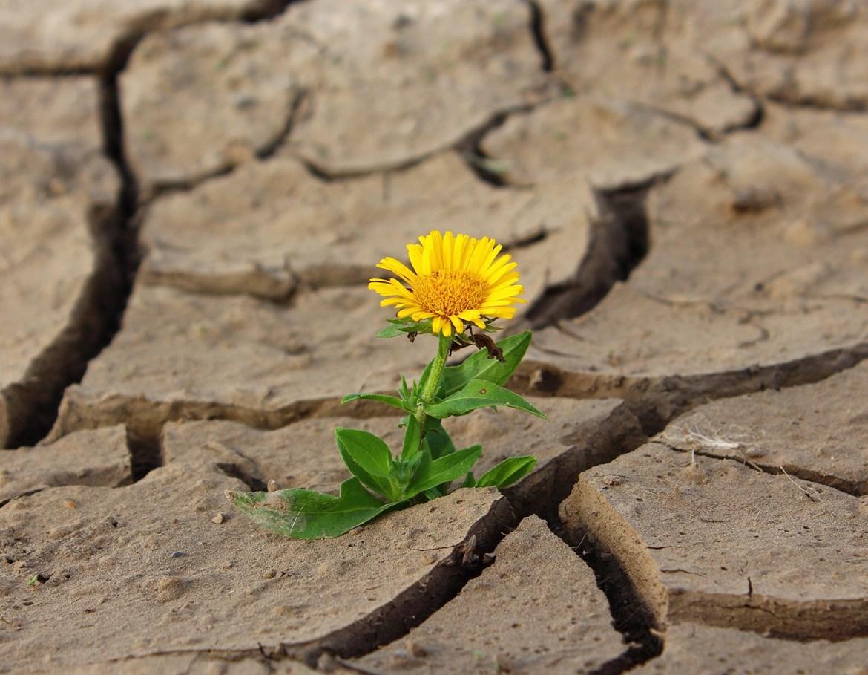 <em>Ilustrační foto (Pixabay.com)</em>
