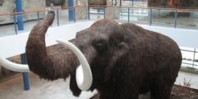 Cena Zlatý mamut - mimořádné sloučení ročníků