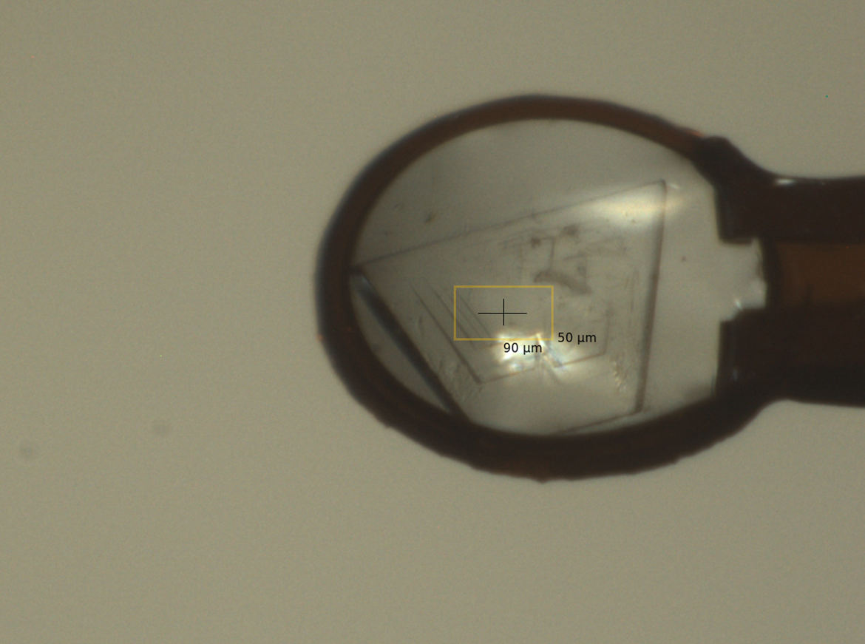 Zmražený krystal enzymu halogenalkandehalogenasy DhaA v nylonové smyčce, která byla umístěna do rentgenového paprsku za účelem sběru krystalografických dat. Žlutý rámeček ukazuje velikost paprsku a místo sběru dat.
