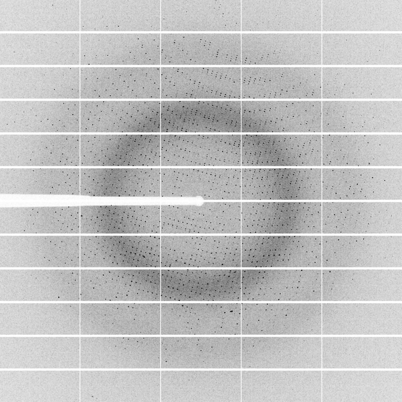 Jeden z difrakčních obrazů enzymu halogenalkandehalogenasy DhaA. Bílý stín vedoucí do středu snímku na levé straně představuje lapač primárního svazku, který chrání detektor před poškozením.