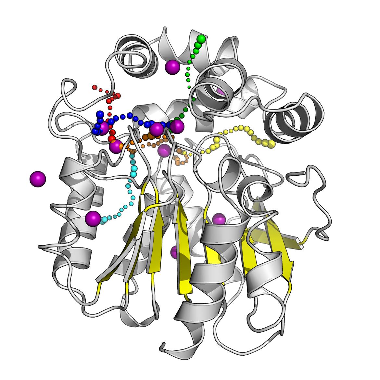 Strukturní model enzymu halogenalkandehalogenasy DhaA. Barevné tečkované dráhy zobrazují molekulární tunely vedoucí do aktivního místa enzymu, kde dochází k chemické přeměně substrátu. Fialové koule představují atomy kryptonu, který byl použit pro experimentální mapování molekulárních tunelů.