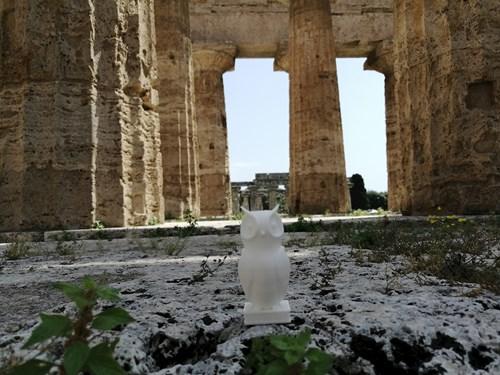 21 Bubo Na Návštěvě U Sousedů (Paestum, Héřin Či Diův Či Apollónův Chrám)