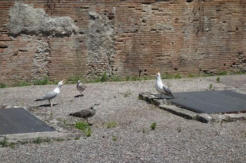 34 Gladiátoři (Pozzuoli, Amfiteátr)