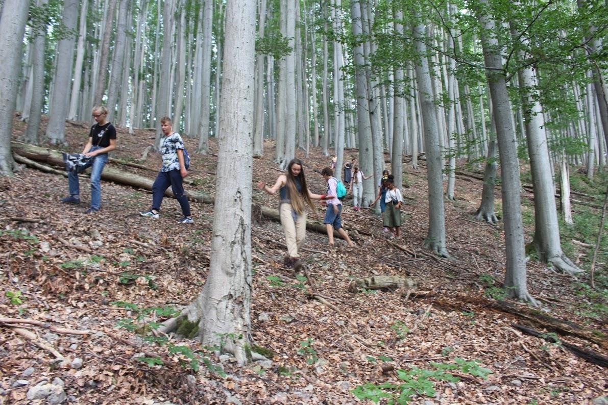 Seznamování lesů