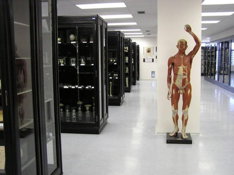 Pohled do Anatomického muzea profesora Karla Žlábka