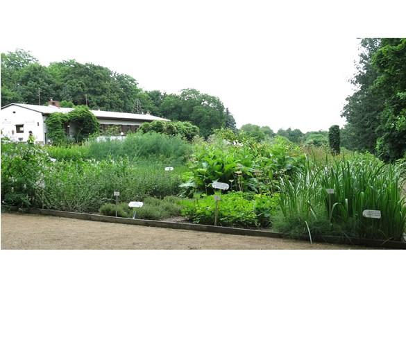 Zahrada Centra léčivých rostlin LF v době výstavy i po celý rok