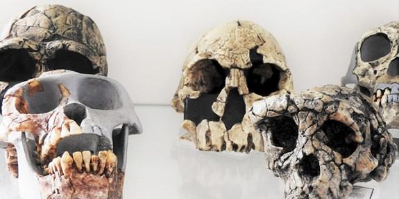 Paleoantropologie