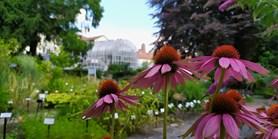 Tip Deníku: naše Botanická zahrada