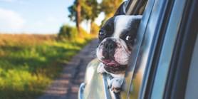 Lidové noviny: Noví parazité přijíždějí se psy