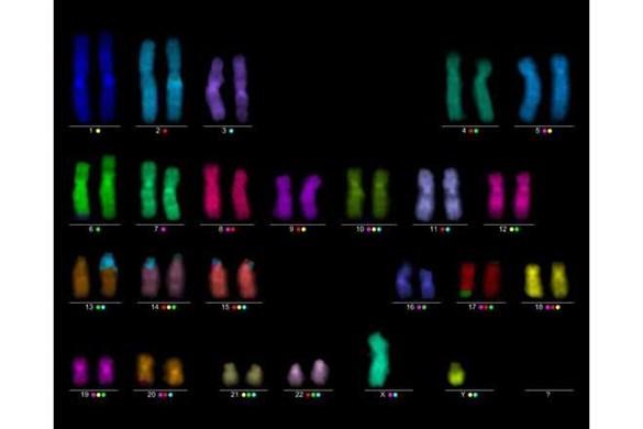 Laboratoře molekulární cytogenetiky a cytogenomiky