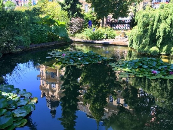 A reflection in the botanical garden