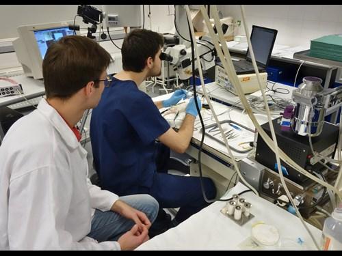 Lékařská fakulta MU: praxe v laboratoři