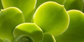 Pozvánka na doktorské obhajoby na Oddělení experimentální biologie rostlin