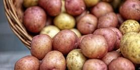 Za 30 let v Česku nevypěstujeme ani brambory, říká expert
