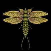 Rekonstrukce zástupce permského hmyzu z vyhynulého řádu Palaeodictyoptera.