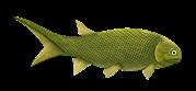 Paramblypterus je rod menší paprskoploutvé ryby dosahující celkové délky asi 15–25 cm, která se ve stratigrafickém záznamu poprvé objevuje již ve svrchním karbonu.