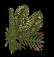 Rekonstrukce kmenu, větví a šištic jehličnanu Walchia.