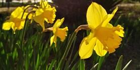 Botanická zahrada otevřela své brány