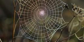 Věděli jste, že existuje Záchranná síť?