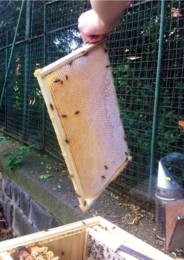 Jedním z mnoha zájmů Sandry Silné je včelařství. Kromě toho se ve volných chvílích ráda prochází přírodou a jezdí s dětmi vlakem na výlety. Foto: archiv Sandry Silné