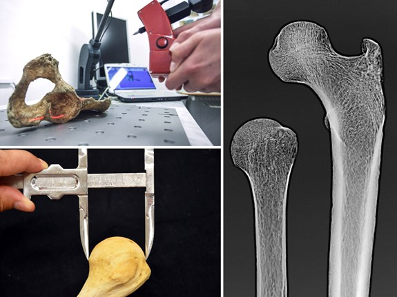 Tradiční i pokročilé osteologické analýzy