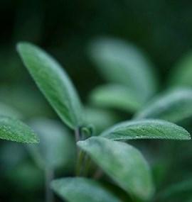 Centrum léčivých rostlin