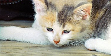 Nové tendence vochraně zvířat I. Správněprávní aspekty týrání domácích mazlíčků