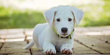 Nové tendence vochraně zvířat II. Trestněprávní aspekty týrání domácích mazlíčků