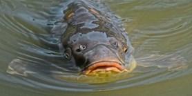 Měří znečištění, aniž by zabíjeli ryby