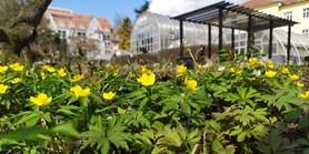 Přijďte si užít jaro do zahrad Masarykovy univerzity