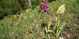 Na místě bývalé sklárny po 300 letech stále nerostou orchideje