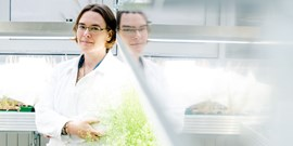 Plant mothers talk to their embryos via the hormone auxin