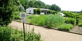 Na Kraví hoře otevřela výstava léčivých rostlin