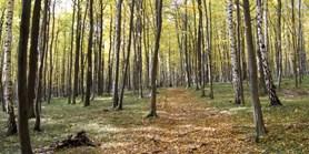 Botanici zmapovali druhové bohatství evropských lesů