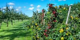 RECETOX hledá dobrovolníky: Zkoumá výskyt pesticidů v lidské populaci