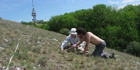 Extrémní sucha ovlivňují i přirozeně nejsušší biotopy jižní Moravy