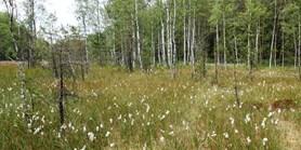 Rašeliništím se v Česku nedaří, říká nový červený seznam biotopů